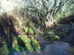 sierra de aracena sendero valdelarco galaroza