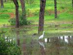 Reflejo en el Bosque Garza Comun